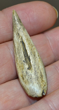 "An Extremely Rare Upper Paleolithic ""Magdalenian"" Antler ""Sagaie"" Bevel end Spear point, France SOLD"